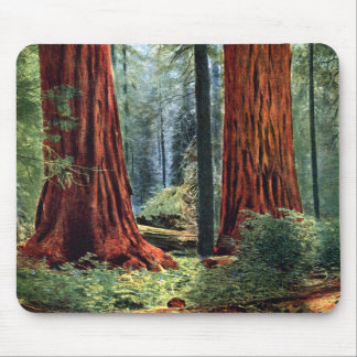 Giant Sequoia Trunks Mousepads