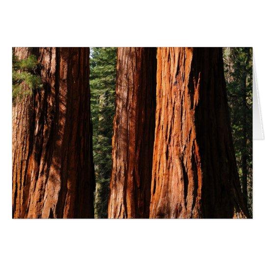 Giant Sequoias Card