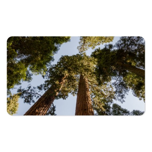 Giant Sequoias in Sequoia National Park Business Card Templates