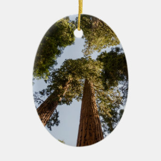 Giant Sequoias in Sequoia National Park Ceramic Oval Decoration