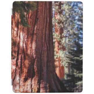 Giant Sequoias Ipad Smart Cover iPad Cover