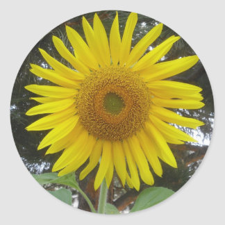 Giant Sunflower Stickers