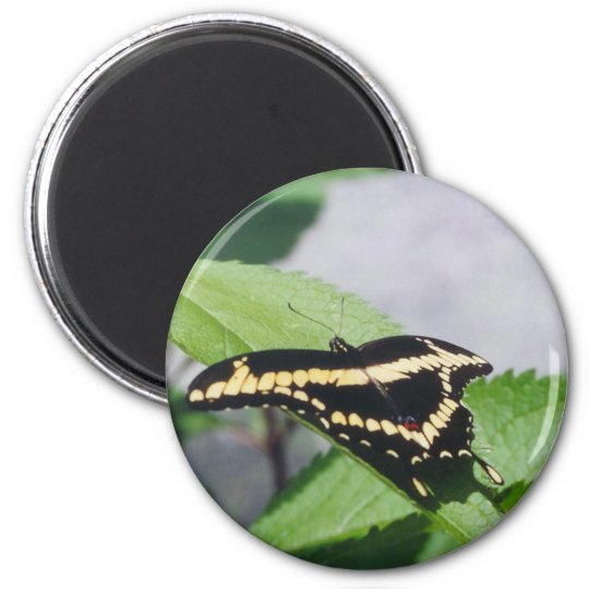 Giant Swallowtail butterfly - magnet