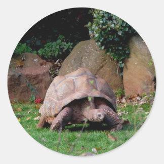 Giant Tortoise Classic Round Sticker