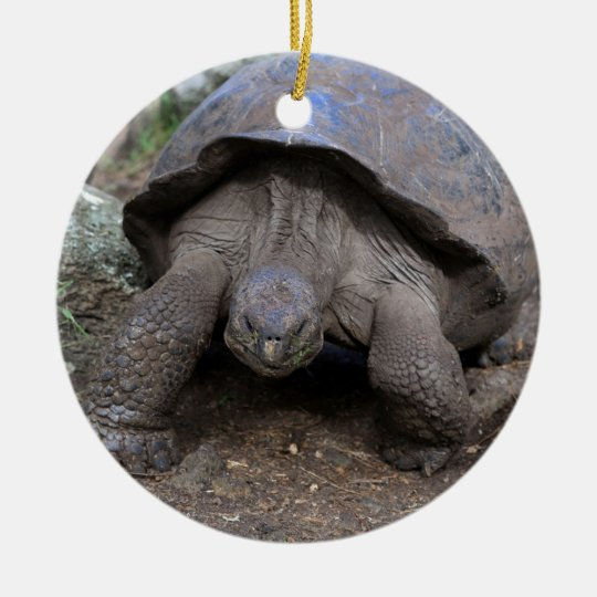 Giant tortoise Galapagos Islands Christmas Ornament