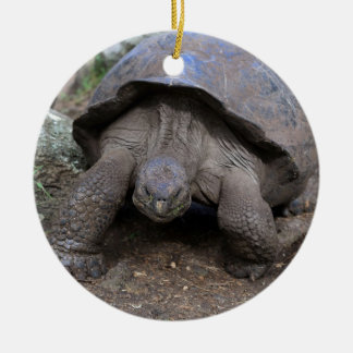 Giant tortoise Galapagos Islands Round Ceramic Decoration