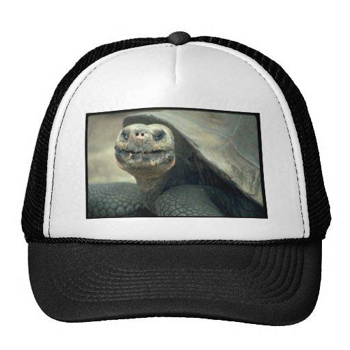 Giant Tortoise Hats