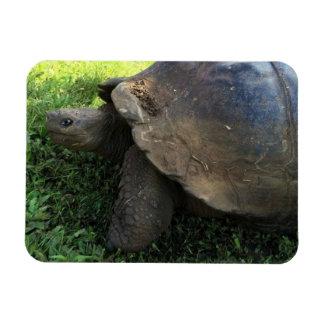 Giant Tortoise Magnet