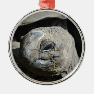 Giant Tortoise Silver-Colored Round Decoration