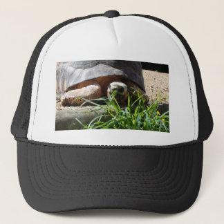 Giant Tortoise Trucker Hat