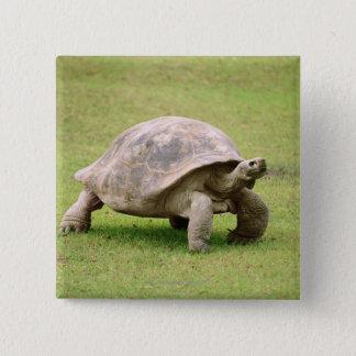 Giant Tortoise walking on grass 15 Cm Square Badge