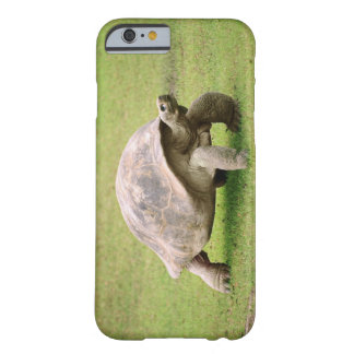 Giant Tortoise walking on grass Barely There iPhone 6 Case