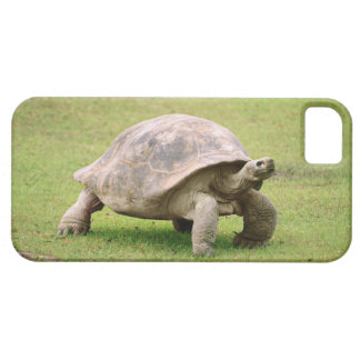 Giant Tortoise walking on grass iPhone 5 Cases