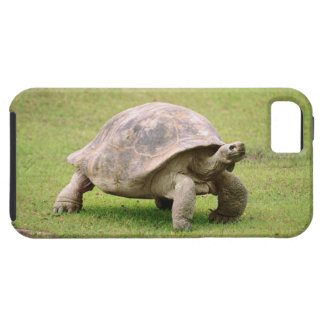 Giant Tortoise walking on grass iPhone 5 Cover