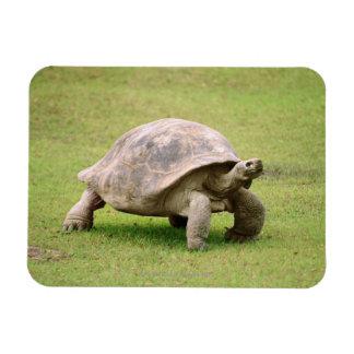 Giant Tortoise walking on grass Rectangular Photo Magnet