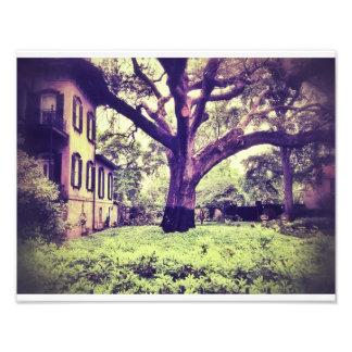 Giant Tree In Savannah Photographic Print