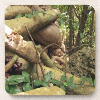 Giant Tree Roots Trip to Zanzibar Island Reefs Fun Drink Coasters