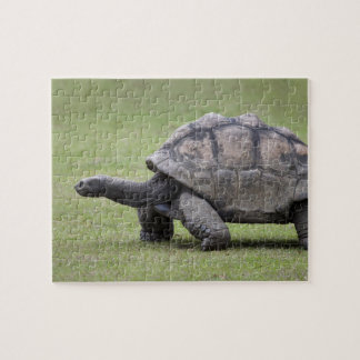 Giant turtle in grass jigsaw puzzle