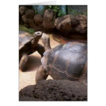 Giant Turtle Kiss Greeting Card