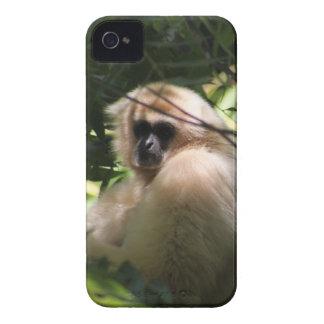Gibbon Monkey iPhone 4 Covers