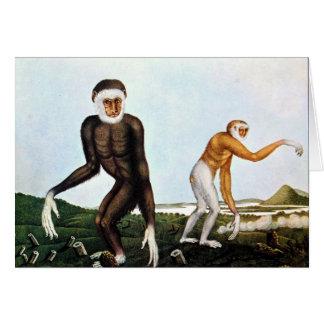Gibbons Illustration by Aloys Zotl Card