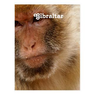 Gibraltar Barbary Macaques Postcard