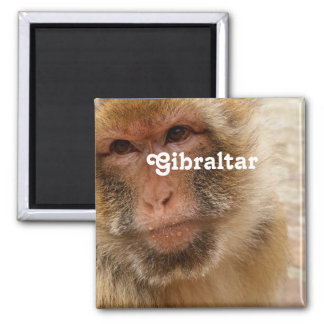 Gibraltar Barbary Macaques Square Magnet