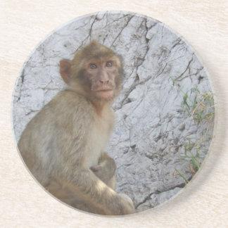 Gibraltar Monkey coaster