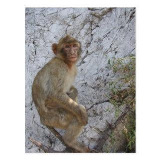 Gibraltar Monkey postcard, customize Postcard