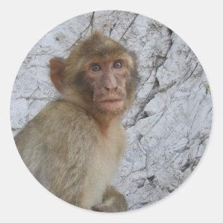 Gibraltar Monkey stickers