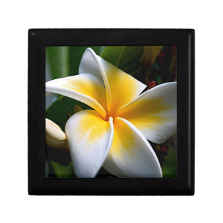 Gift box with yellow tropical flower