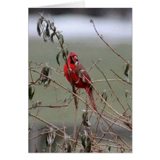 Gift Cards- Cardinal Card