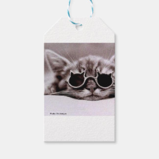 Gift Tag: Coolest Cat alive Gift Tags