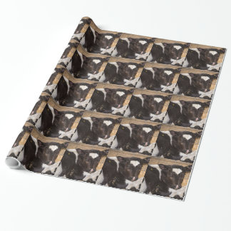 gift wrapping paper  black and white cow