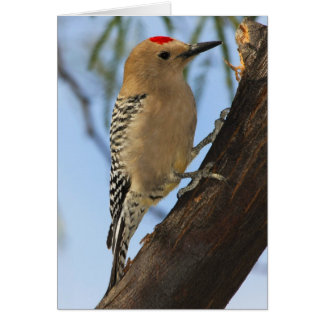 Gila Woodpecker 251a Card