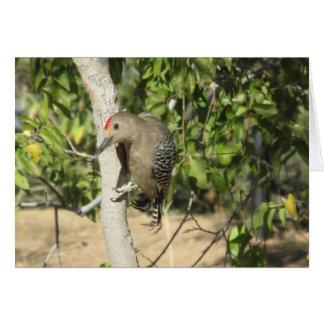 Gila Woodpecker Card