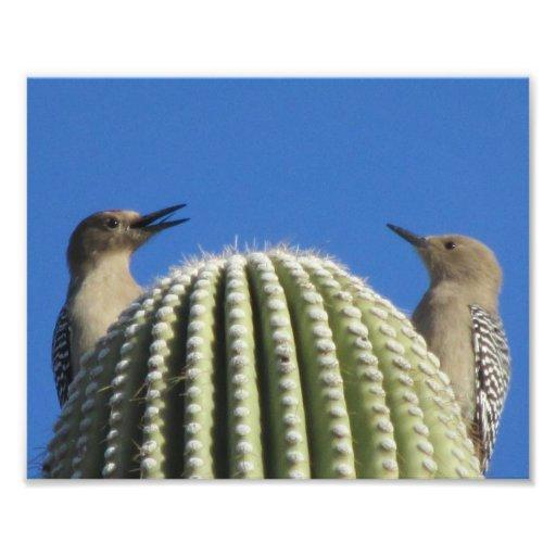 Gila Woodpecker Couple Photo Print