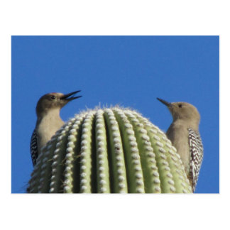 Gila Woodpecker Couple Postcard