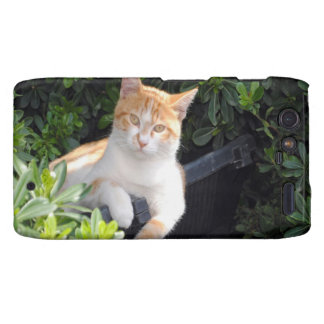 Ginger and White Cat Droid RAZR Cover