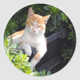 Ginger and White Cat Classic Round Sticker