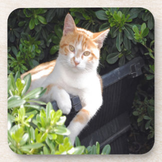 Ginger and White Cat Coaster