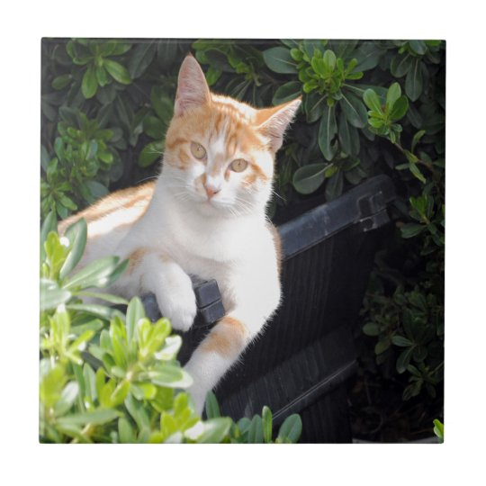 Ginger and White Cat Small Square Tile
