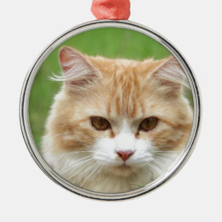 Ginger and White Cat, so cute! Silver-Colored Round Decoration