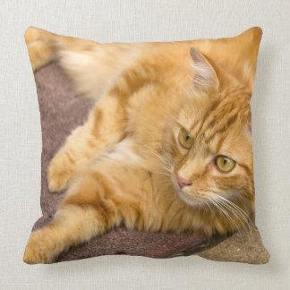 Ginger Cat Golden Eyes Cushion