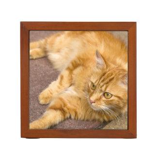 Ginger Cat Golden Eyes Desk Organiser