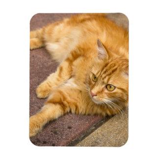 Ginger Cat Golden Eyes Rectangular Photo Magnet