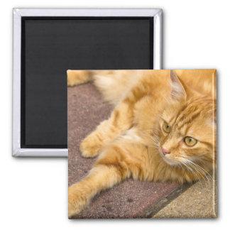 Ginger Cat Golden Eyes Square Magnet