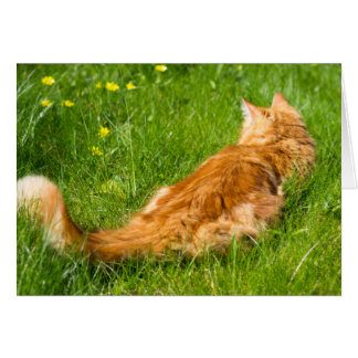 Ginger Cat In The Springtime Card