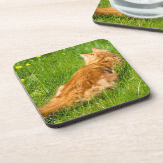 Ginger Cat In The Springtime Coasters