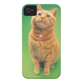 Ginger cat sitting, looking upwards iPhone 4 Case-Mate cases